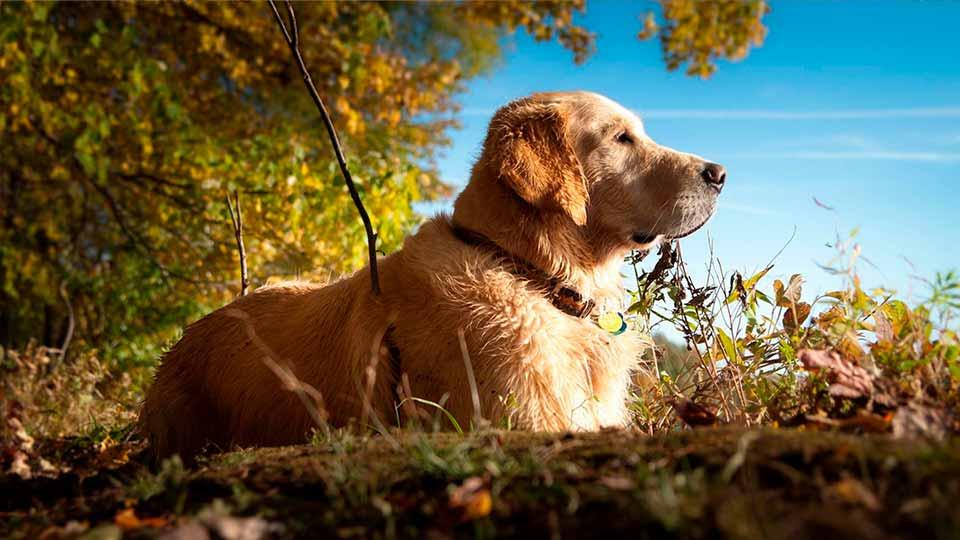camping with dog ottawa