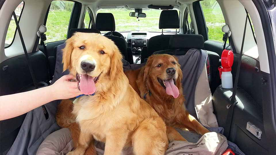 camping sites with dog kennels