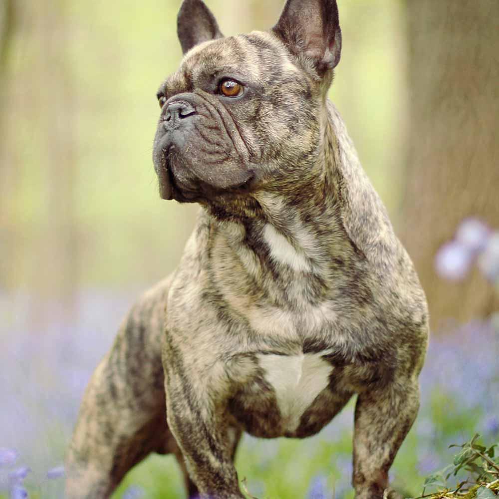 camping dog leash