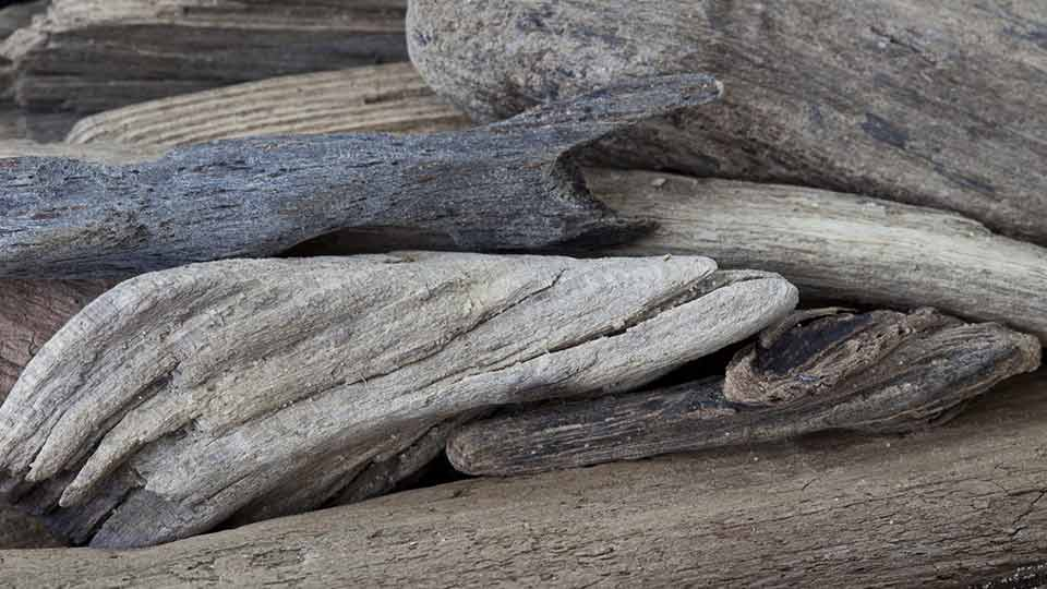 What Kind of Wood Should You Not Cook Over